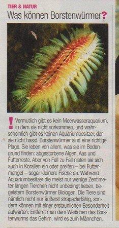 borstenwuermer_wwwschneeseicherch