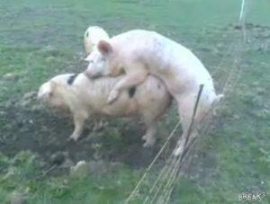 schweinchensex_wwwschneeseicherch