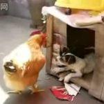 Wie man ein Chick(en) abschleppt