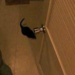 Aaaaaah eine Maus!