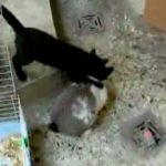 Hase vs. Katze