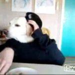 Hund isst am Tisch