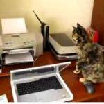 Katze hat Angst vor dem Drucker