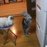 Katze beschwört den Kühlschrank