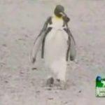 Pingu geht einkaufen
