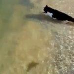 Schwimmende Katze