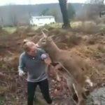 Spitzer Hirsch besteigt junge Blondine