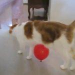 Statisch geladene Katze