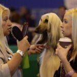 Welche Blondine passt nicht in's Bild?